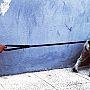 maruja-guinzaglio